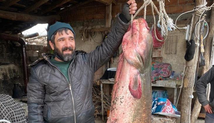 Balıkçıların oltasına 71 kilo ağırlığında yayın balığı takıldı