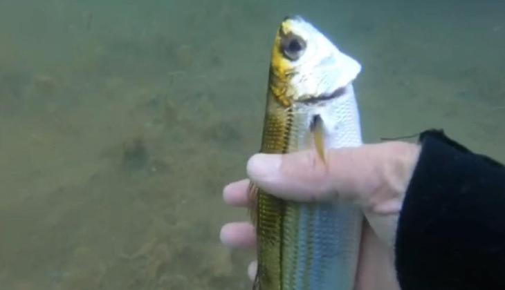Deniz salyaları su altı yaşamını da olumsuz etkiliyor