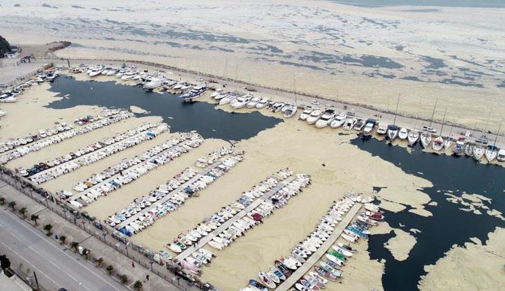 Deniz salyaları sudaki canlıların sonu oluyor!