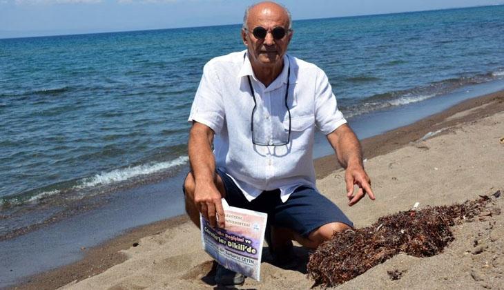 Deniz salyası felaketinin ardından Dikili kıyılarında görünen başka bir tehlike ortaya çıktı