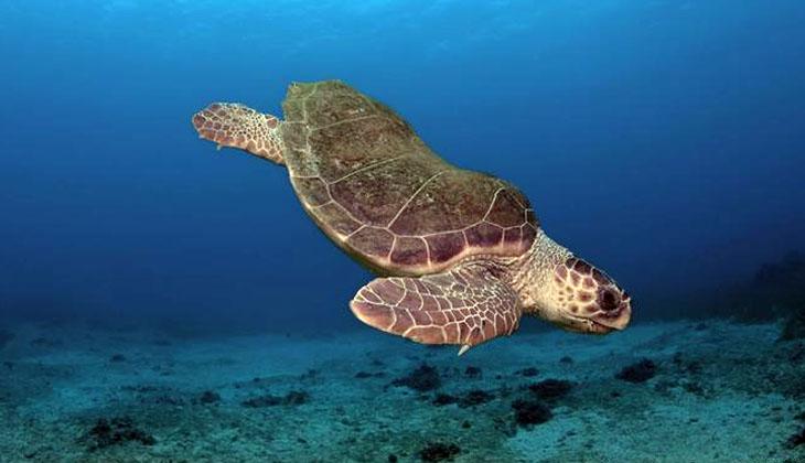 Dünyada en hızlı ısınan deniz olan Akdeniz büyük tehdit altında