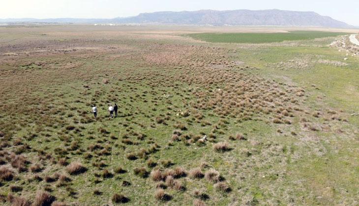 Göçmen kuşların uğrak yeri Beylerli Gölü kuraklığa yenildi