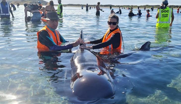 Karaya vuran 49 balinadan 9'u öldü