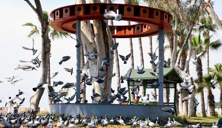 Mersin'de sahil bandına doğadaki kuşlar için kuş evi yerleştirildi