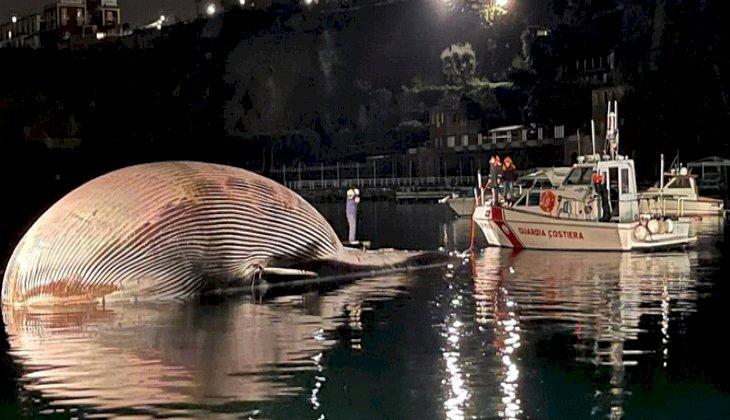 İtalya'da dev balina karaya vurdu