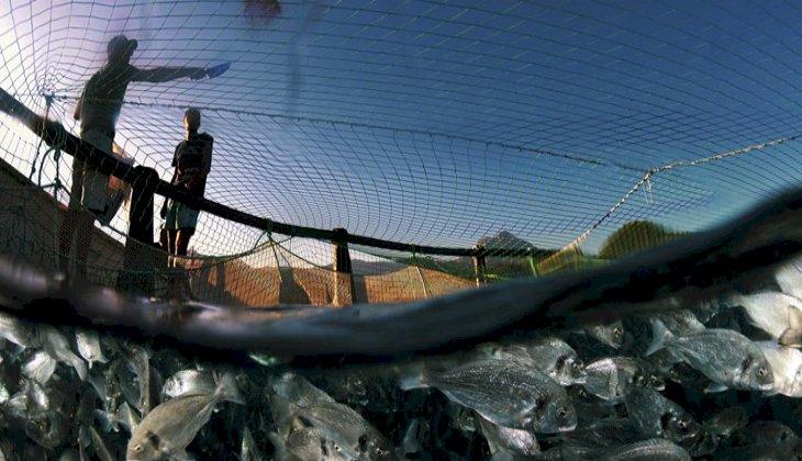 Egeli balıkçılardan 741 milyon dolarlık ihracat başarısı