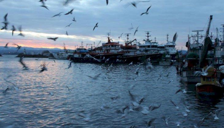 Balıkçılar limana boş kasalar ile dönüyor