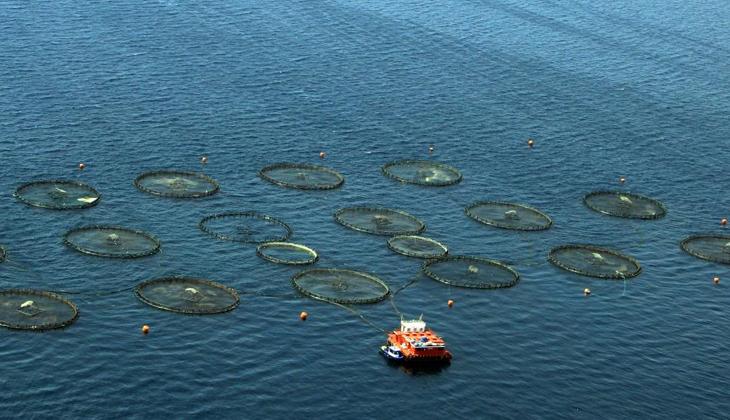 Pandemi döneminde Muğla'dan dünyanın 67 ülkesine 410 milyon dolarlık balık ihracatı gerçekleşti