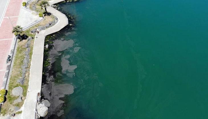 Samsun Liman'ında deniz salyası(müsilaj) görüldü