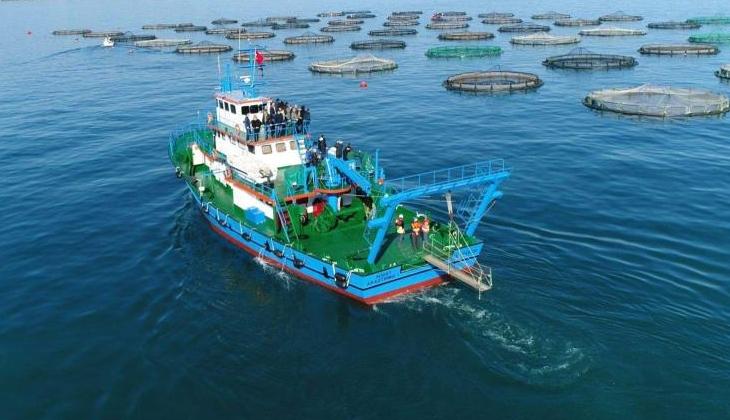 Trabzon'dan su ürünleri ihracatı son 5 yılda rekor oranda artış gösterdi