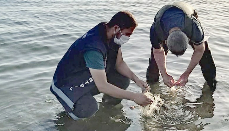 Van Gölü'nde 1 tondan fazla inci kefali ele geçirildi