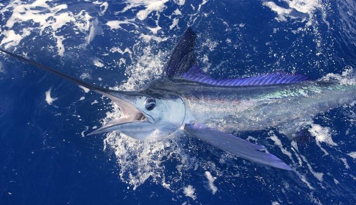 Yasa dışı kılıç balığı avcılığı yapanlara ceza kesildi